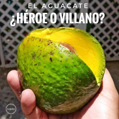El Aguacate: ¿héroe o villano?